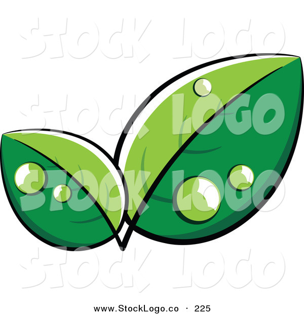 Vector Logo of a Pre-Made Logo of Lush Green Leaves with Dew Drops, with Space for a Business Name and Company Slogan Below